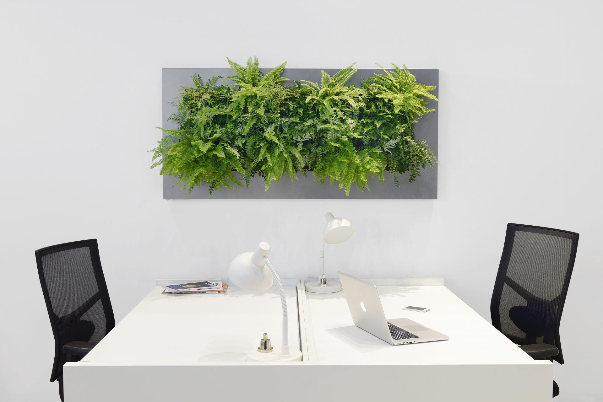 groene wand op het kantoor