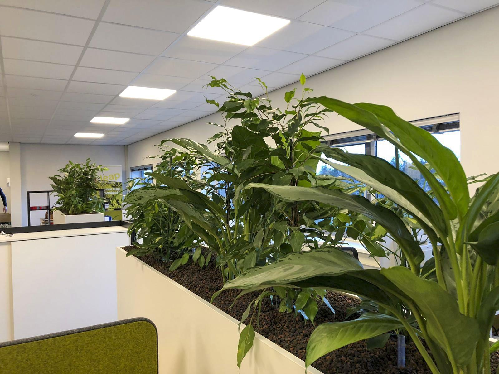 welke planten op kantoor