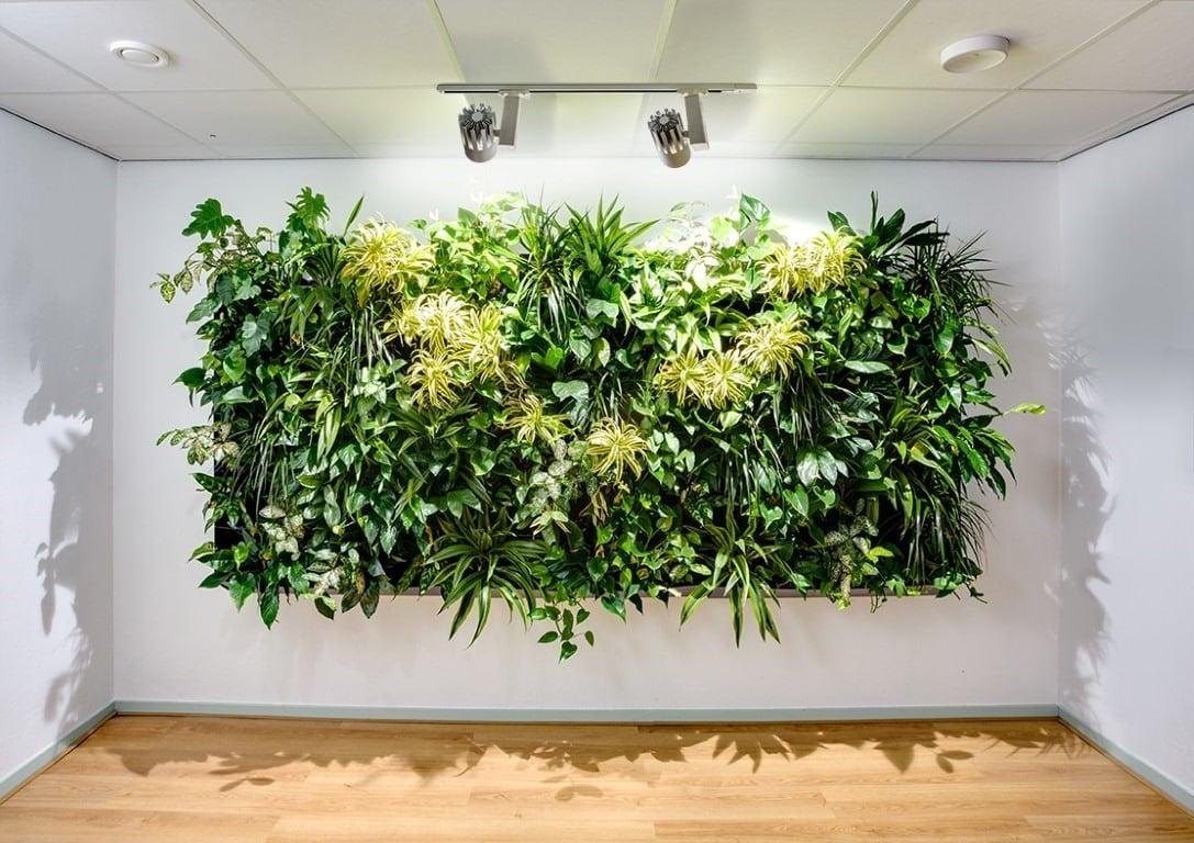 Plantenwand voor een gezond kantoorklimaat